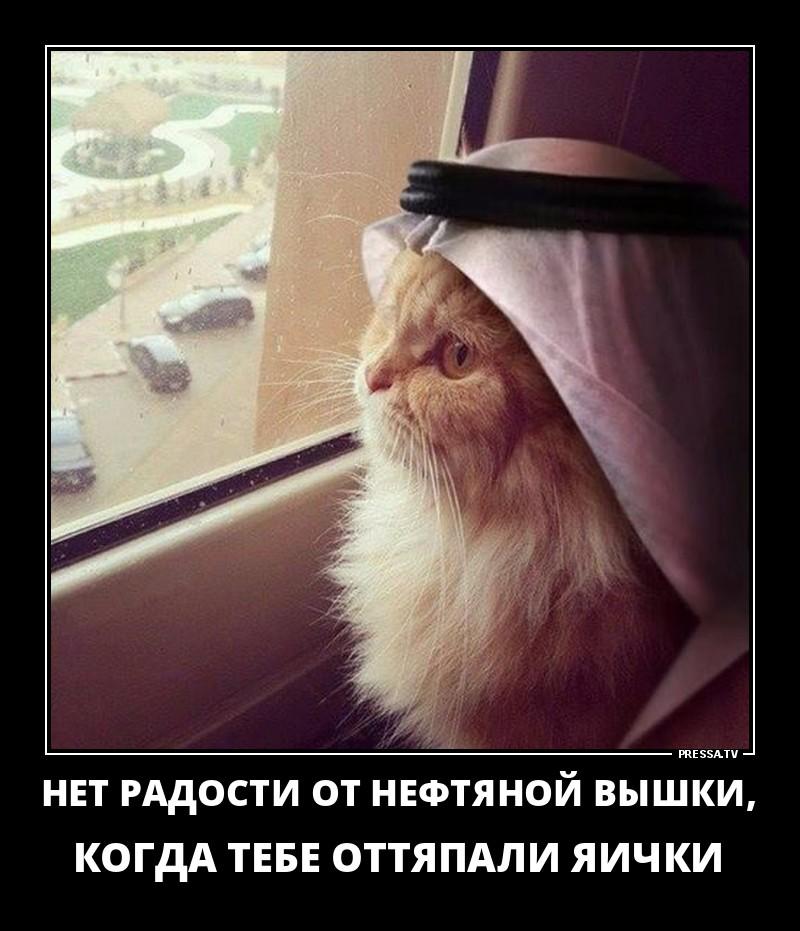 Для, картинка прикол кот шейх что толку в вышках
