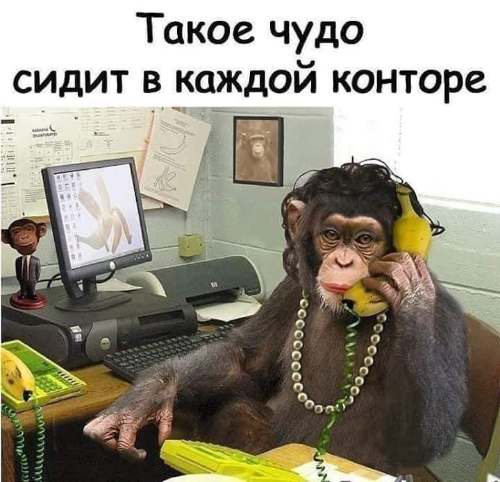 замыкание открытка с обезьяной и не звоните мне я в отпуске зданий