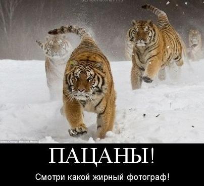 ЮМОР  В ОТКРЫТКАХ  - Страница 7 01-3